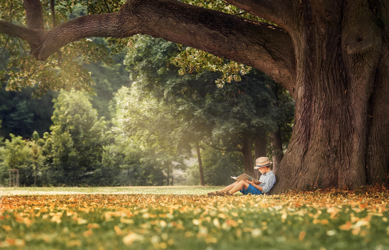 shutterstock_reading tree